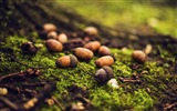Title:Green grass nuts-Macro photo HD Wallpaper Views:1097