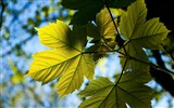 Title:Leaves background sky branch-Macro Photo HD Wallpaper Views:1355