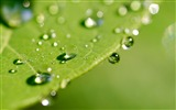 Title:Leaves drops dew surface-Macro Photo HD Wallpaper Views:1109