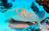 Title:Sea egypt brothers island-Marine life HD Wallpaper Views:1475