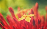 Title:red flower bokeh-Macro photo HD Wallpaper Views:1050