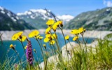 Title:wildflower fresh air outside-Spring Flowers HD Wallpaper Views:1369