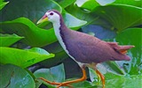 Title:Animal World Elves Birds Photo Wallpaper 01 Views:1305