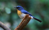 Title:Animal World Elves Birds Photo Wallpaper 03 Views:1120