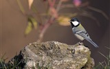 Title:Animal World Elves Birds Photo Wallpaper 05 Views:1165
