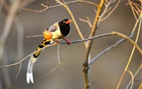 Title:Animal World Elves Birds Photo Wallpaper 15 Views:1152