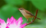 Title:Animal World Elves Birds Photo Desktop Wallpaper Views:2754