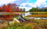 Title:Autumn landscape grass river trees-Nature High Quality Wallpaper Views:1360