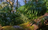 Title:Fern and Wood-Scotland Photography Wallpaper Views:864
