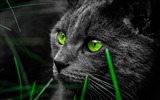 Title:Green cat eyes in the dark-High Quality HD Wallpaper Views:1073