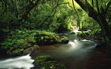 Title:Jungle river trees moss lianas-Nature High Quality Wallpaper Views:1487