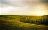 Title:Summer Field Forest Rain OpenSpace-Nature High Quality Wallpaper Views:1215