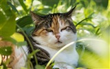 Title:Cat face grass sleepy-2016 High Quality Wallpaper Views:1037