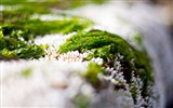 Title:Grass snow green white-Plants Photo HD Wallpaper Views:1311