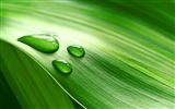Title:Green leaf drop band-Plants Photo HD Wallpaper Views:1237