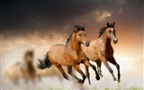 Title:Steppe horse galloping animal theme HD Wallpaper Views:3824