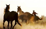 Title:Horse cowboy lasso-Grassland animal HD Wallpaper Views:1139