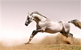 Title:Horse dust grass jump-Grassland animal HD Wallpaper Views:1237