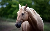 Title:Horse face eyes-Grassland animal HD Wallpaper Views:932
