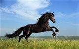 Title:Horse grass jump sky-Grassland animal HD Wallpaper Views:1310