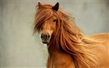 Title:Horse mane head eyes-Grassland animal HD Wallpaper Views:1191