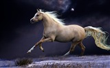 Title:Horse mane running beautiful night sky-Grassland animal HD Wallpaper Views:1222