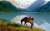 Title:Horse mountain lake walk-Grassland animal HD Wallpaper Views:1361
