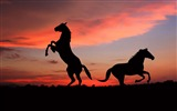 Title:Horse silhouette shadow sunset-Grassland animal HD Wallpaper Views:1207