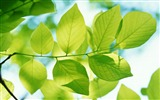 Title:Leaves from plant green-Plants Photo HD Wallpaper Views:955
