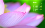 Title:May 2016 Calendar Desktop Themes Wallpapers Views:2561