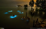 Title:Ban Tha Len Krabi Thailand-2016 National Geographic Wallpaper Views:1287