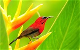 Title:10wallpaper-com Animal World Photo HD Wallpaper Views:3188