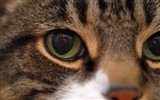 Title:Cat face eyes close-up-Animal Photo HD Wallpaper Views:1050