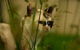 Title:Cat face grass spotted-Animal Photo HD Wallpaper Views:859