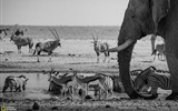 Title:Etosha National Park Namibia-2016 National Geographic Wallpaper Views:1126