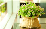 Title:Flowers small green bag-Flowers Photo HD Wallpaper Views:901