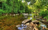 Title:Green forest rocky river-High Quality HD Wallpaper Views:885