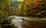 Title:Harz Germany Autumn River Forest-Scenery High Quality Wallpaper Views:1086