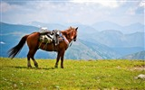 Title:Horse Saddle Mountains-Animal Photo HD Wallpaper Views:1076