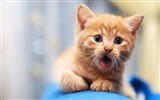 Title:Kitten face blur sight-Animal Photo HD Wallpaper Views:1019