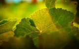 Title:Leaves macro light veins-High Quality HD Wallpaper Views:1003