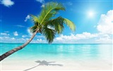 Title:Palm tree beach sunny-Summer Scenery HD Wallpaper Views:2439