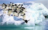 Title:Penguins water snow-Animal Photo HD Wallpaper Views:1061