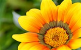 Title:Yellow petals close-up-Flowers Photo HD Wallpaper Views:776