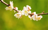 Title:Flowers branches spring bloom-2016 High Quality HD Wallpaper Views:1355