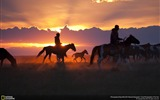Title:Horse Foal with Rim Light-National Geographic Wallpaper Views:833