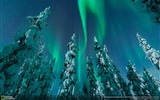 Title:Northern lights snowy forest-National Geographic Wallpaper Views:1173