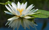 Title:Summer Blooming Lotus Photo Wallpaper 14 Views:931