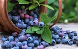 Title:Bilberry berry crop basket-2016 Food HD Wallpaper Views:1254