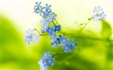 Title:Flowers small stems greenery blurring-Flowers photography wallpaper Views:1445